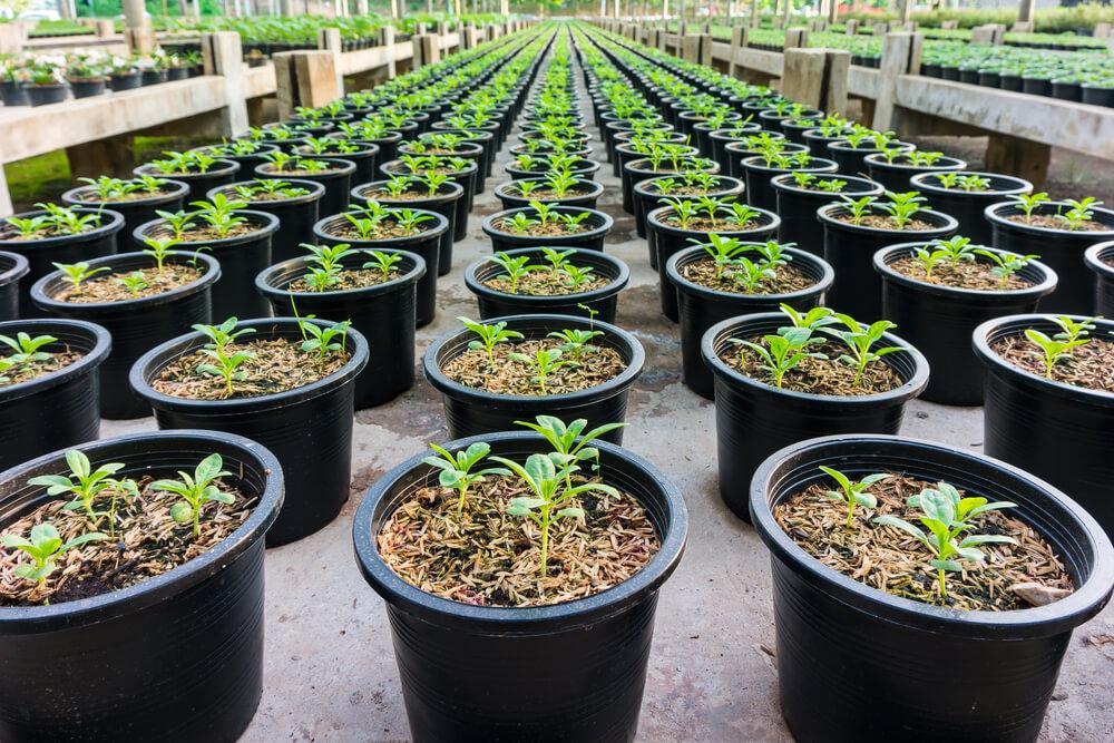 Groeiende plantjes