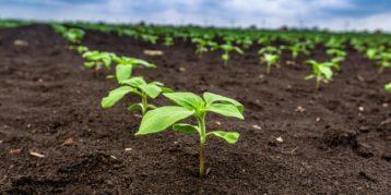 AgroFlits week 3
