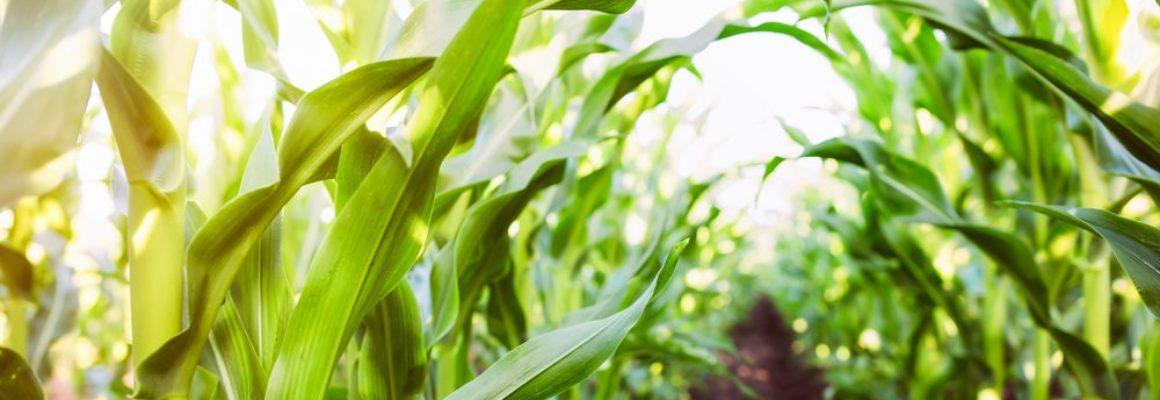 Coronavirus en Agrariërs: een overzicht van de regelingen