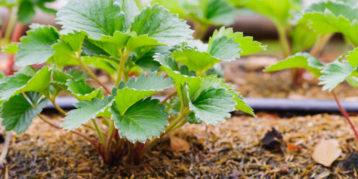 Agroflits week 14